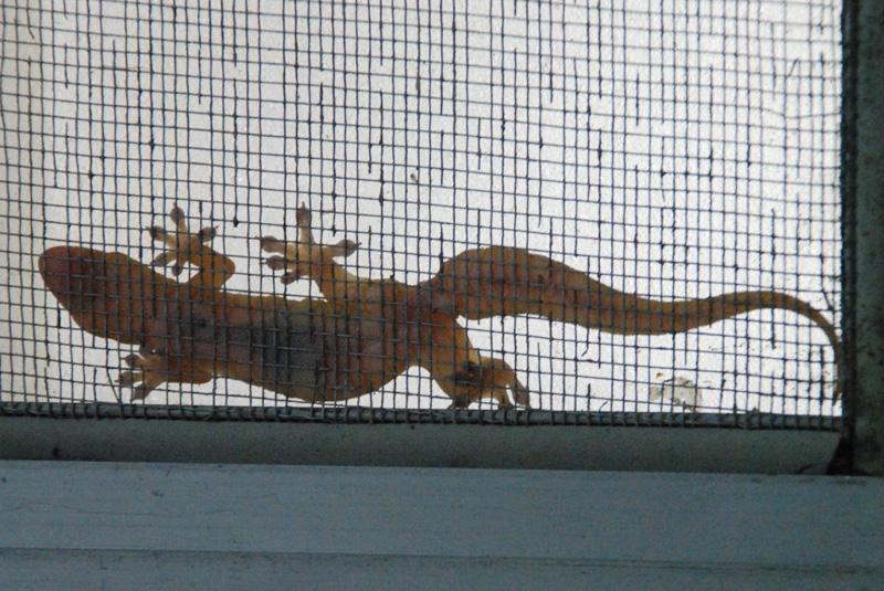 VILLA-Gecko