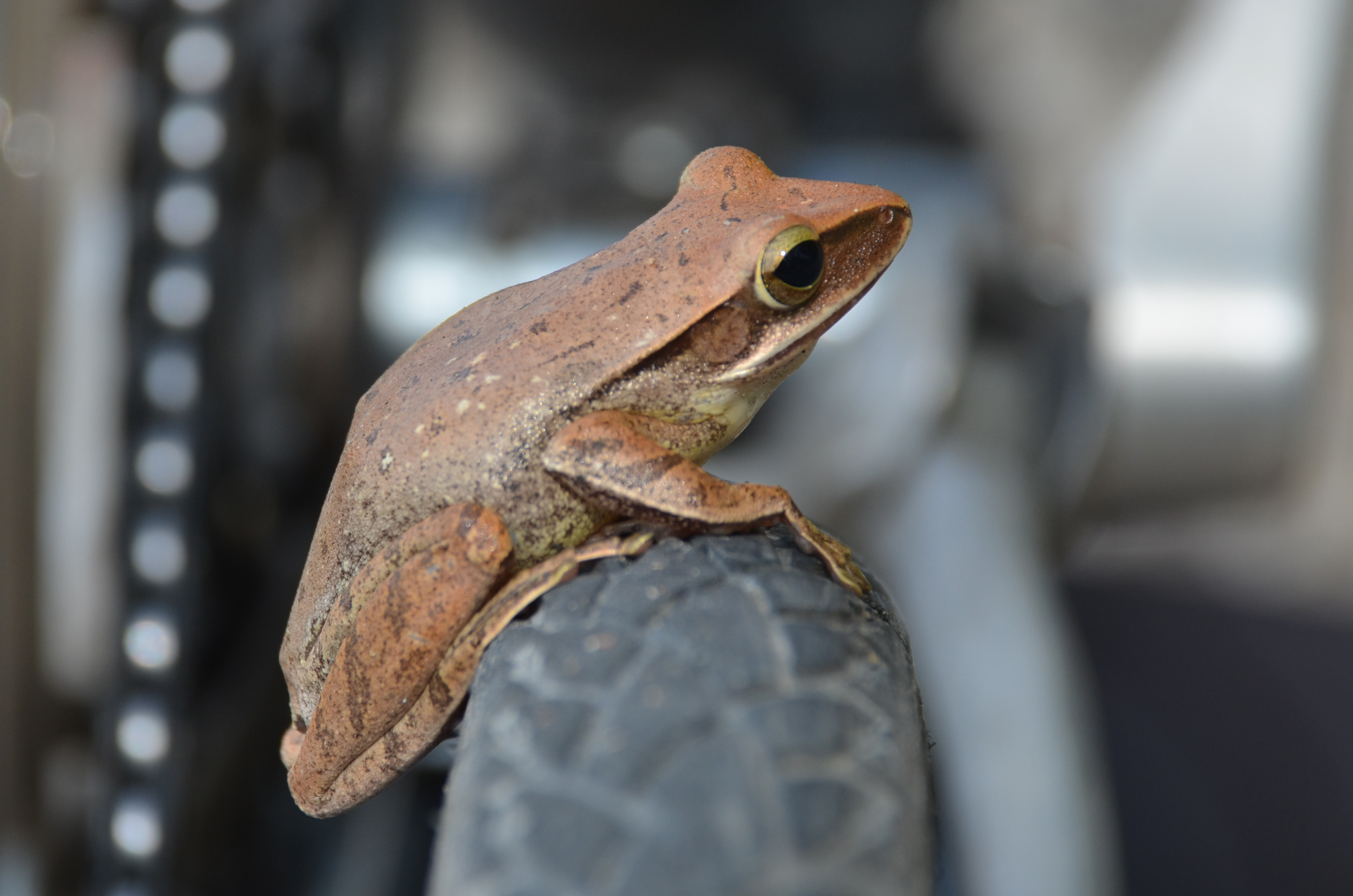 Fahrradfrosch_oben