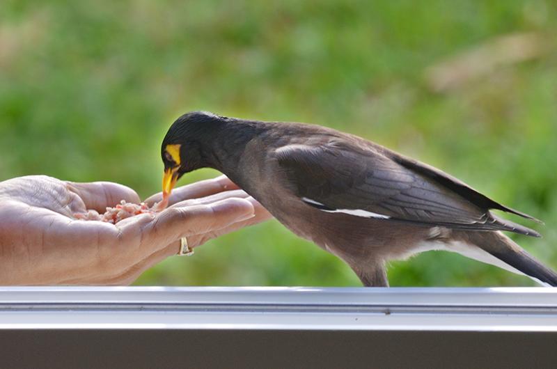 neues leben ulkiger vogel