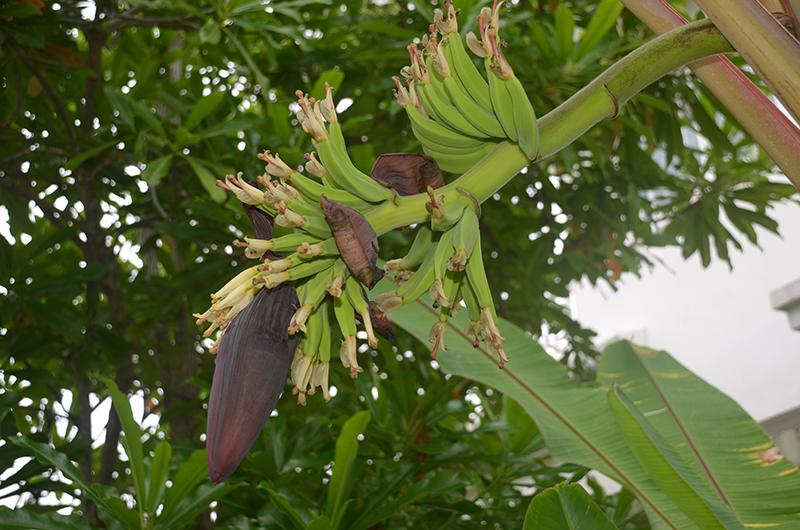 8ban0913_fruchtbluete