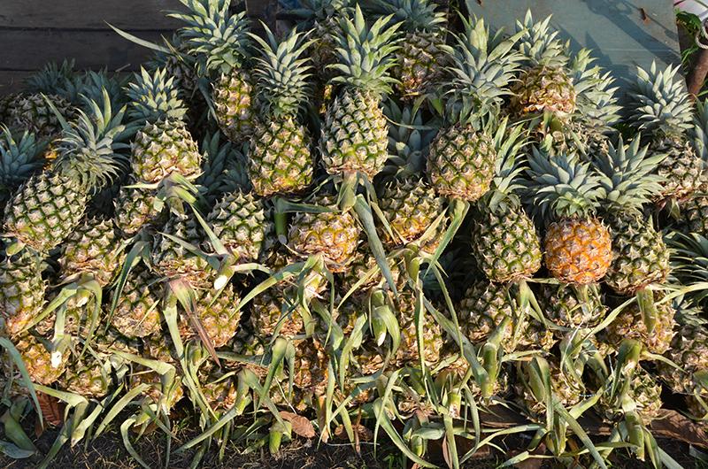 ananas einst frucht des adels heute f r jedermann petanque in phuket. Black Bedroom Furniture Sets. Home Design Ideas